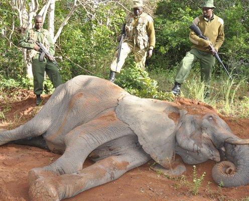 Kenya Wildlife Service Rangers