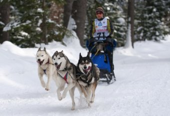 One Traveling by Dog Sled